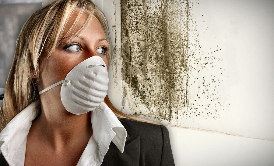 Mold Masters | Mold Removal Pasadena � Remediation & Mold Inspections